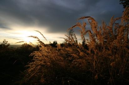 Herbstgräser am Auerberg / Ostallgäu
