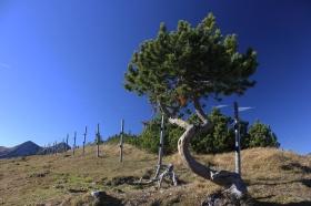 Einsame Wege am Feldernkopf / Ammergauer Alpen